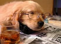犬の性格・愛犬君の血液型知ってますか?