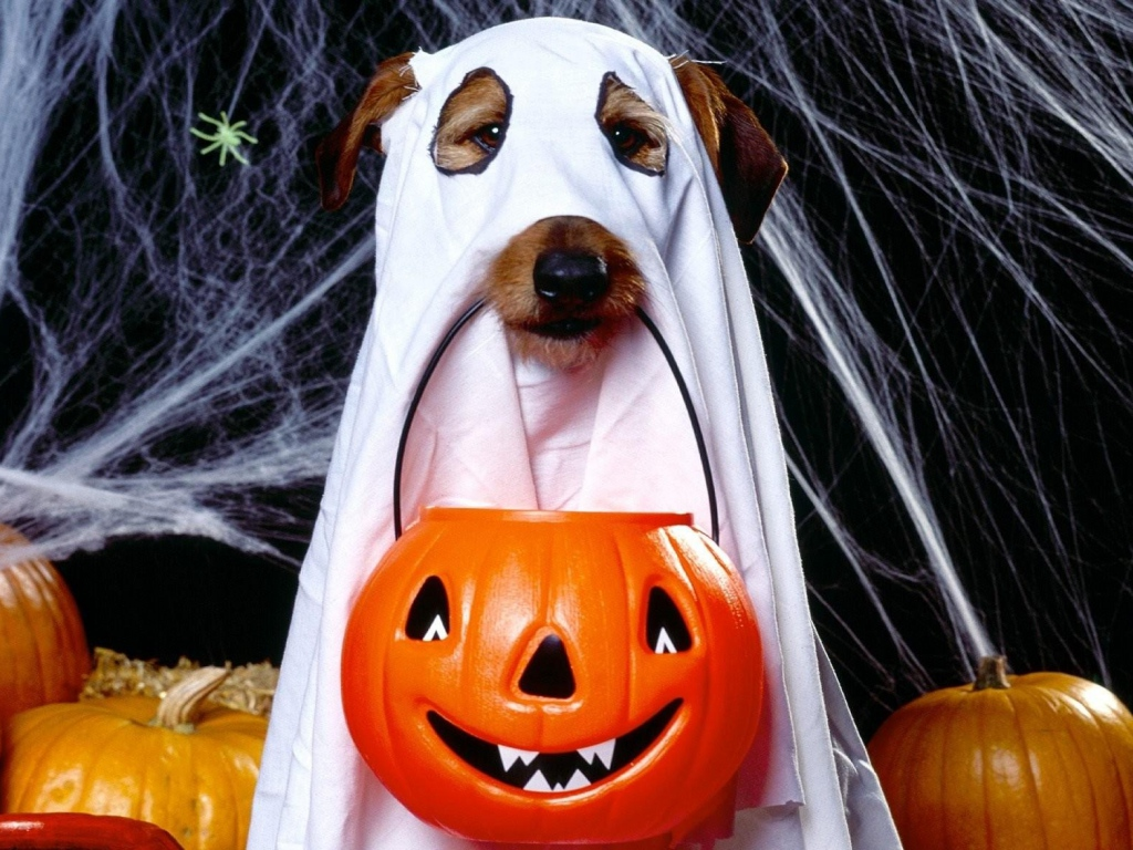 halloween_holiday_dog_ghost_jack_lantern_spider_webs_61822_1024x768