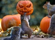 すっかり楽しいイベントとして定着してきた【Halloween】って何?
