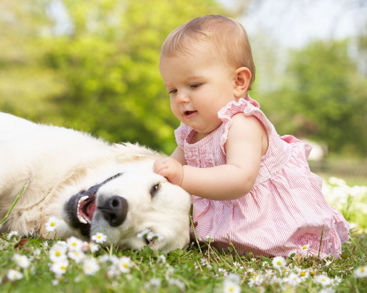 baby_toddler_girl_grass_dog_game_80631_1280x1024