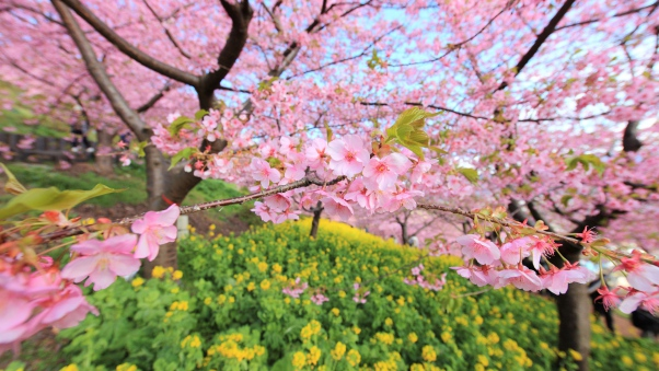 spring_bloom_tree_flowers_93587_602x339