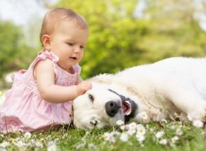 犬と赤ちゃんの関係、アレルギーや衛生管理について