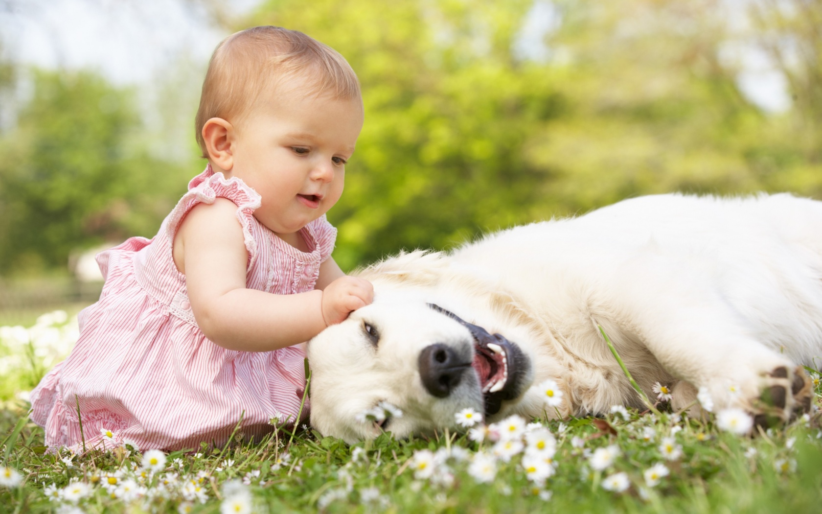 Cute-Girl-Baby-Playing-with-Dog