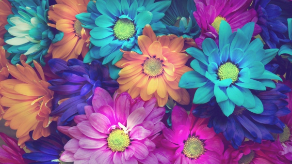 flowers_colorful_petals_97676_602x339