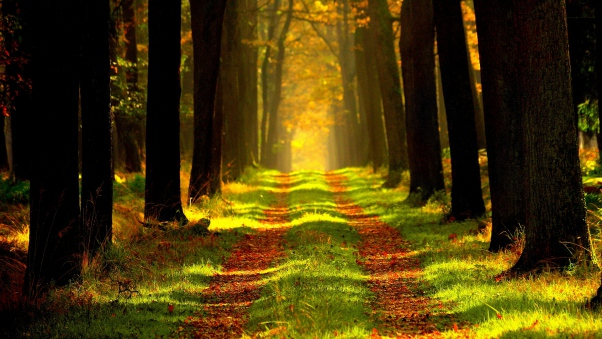 forest_path_autumn_trees_foliage_107215_602x339