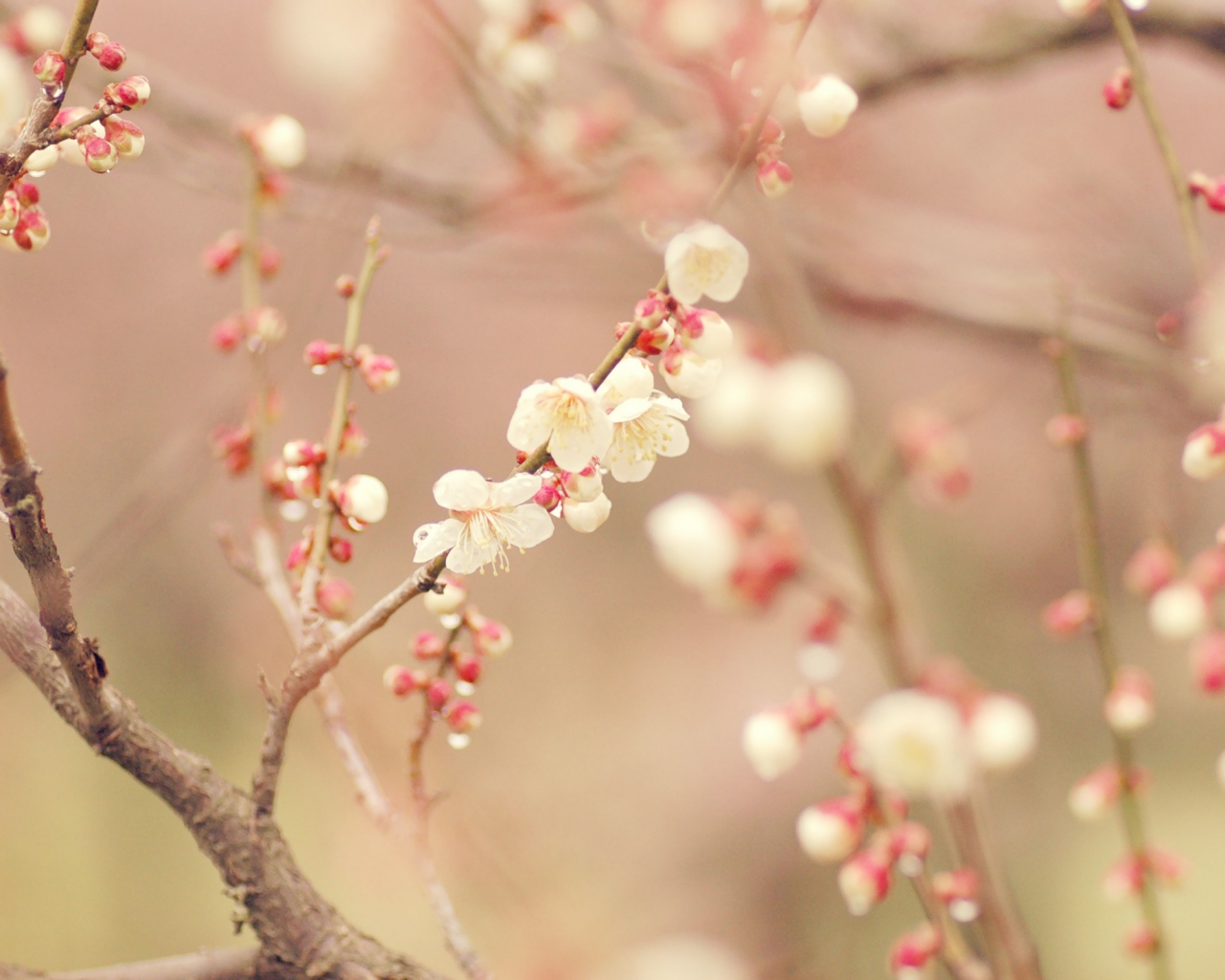 spring_tree_blossom_flowers_49973_1280x1024