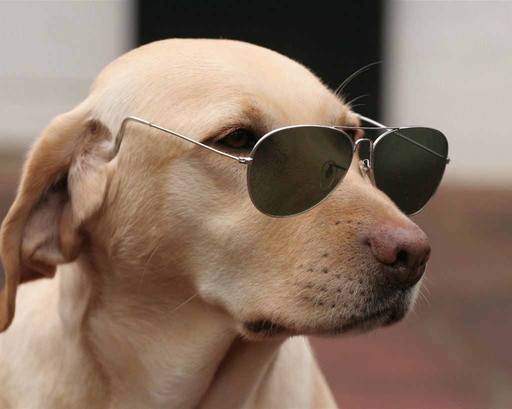dog_face_sunglasses_56127_1280x1024
