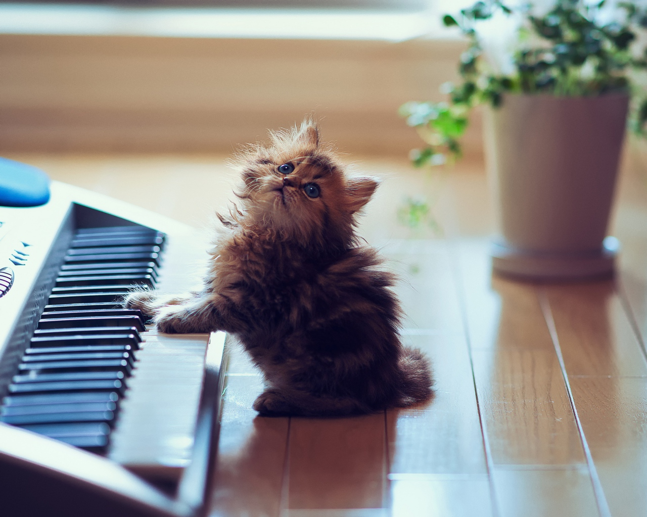 kitty_fluffy_floors_keyboards_synthesizer_sit_playful_53339_1280x1024
