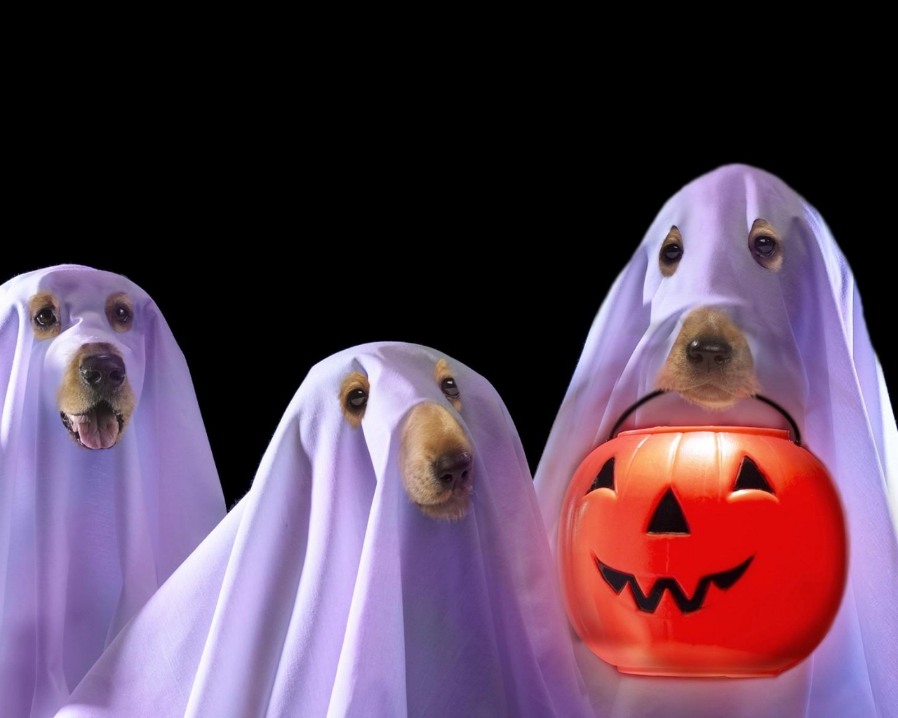 halloween_holiday_dog_bring_lantern_40973_1280x1024