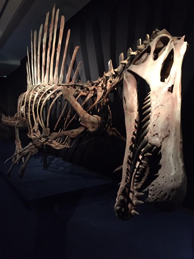 スピノサウルス全身骨格