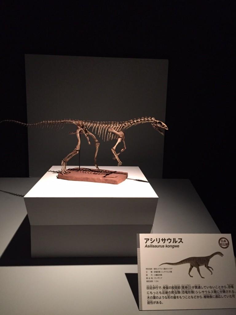 アシリサウルス