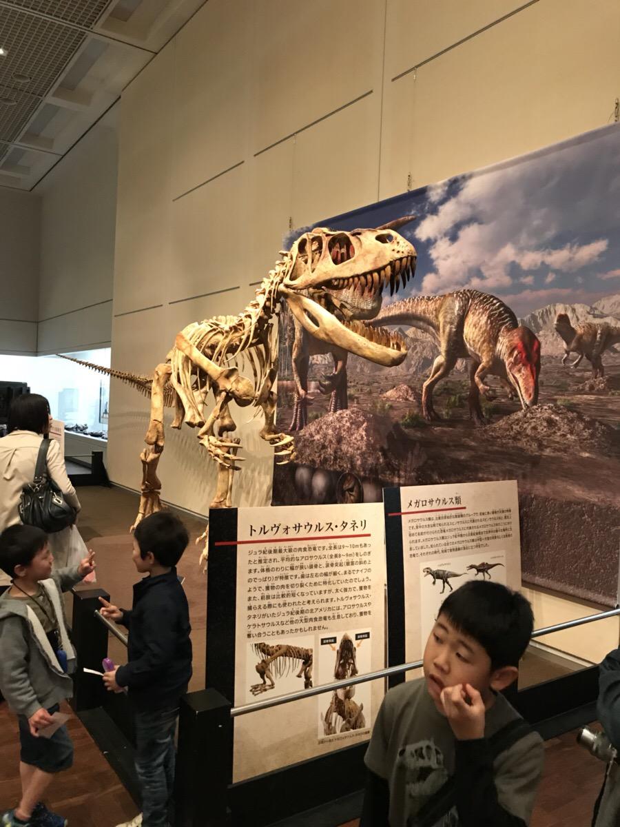 恐竜博~in 大阪市立自然史博物館~